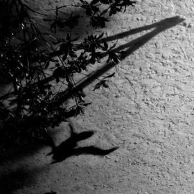 Max Richter: Shadow journal