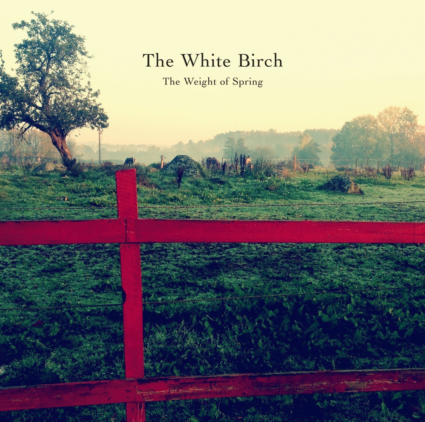 The White Birch: The Weight of Spring