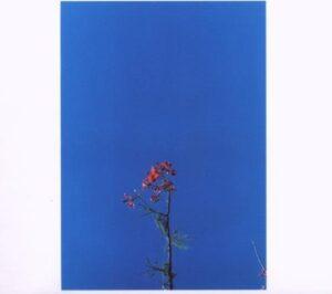 Joanna Newsom & The Ys Street Band EP (2007)